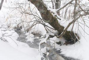 Gefrorener Bachlauf Schützenbach im Winter