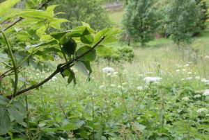Garten mit Bachlauf mitten in der Natur