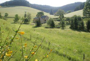 Ferienhaus im Schwarzwald, am früheren Seilerhansenhof, Blick vom Waldrand