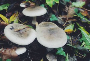 Pilze im Wald entdeckt
