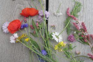 Wiesenblumen am Seilerhansenhof