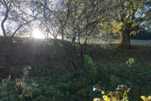 Garten Herbst Morgenstimmung