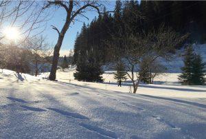 Schnee Februar Winter Garten Seilerhansenhof