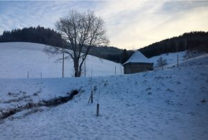Winter Kapelle Garten Seilerhansenhof