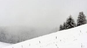 Schnee Schwarzwald Ferienhaus am früheren Seilerhansenhof Architektur Alleinlage Natur Winter