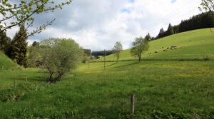 Landschaft Vorderschützenbach Seilerhansenhof Alleinlage Ferienhaus Furtwangen