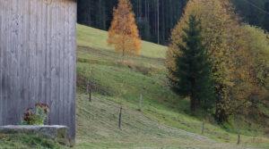 Garten Herbst Furtwangen Vorderschützenbach Ferienhaus am früheren Seilerhansenhof