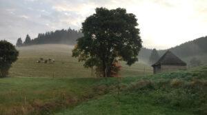 Herbst Furtwangen Vorderschützenbach Ferienhaus am früheren Seilerhansenhof